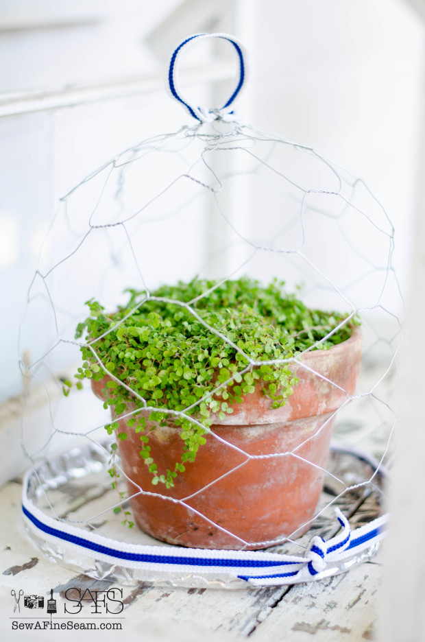 chicken wire cloche - how to make your own