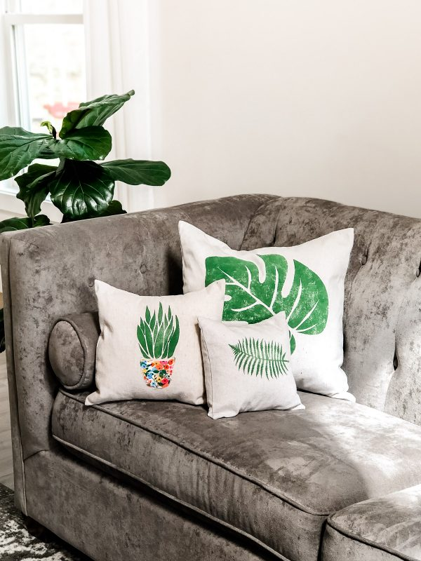 succulent fern leaf and monstera